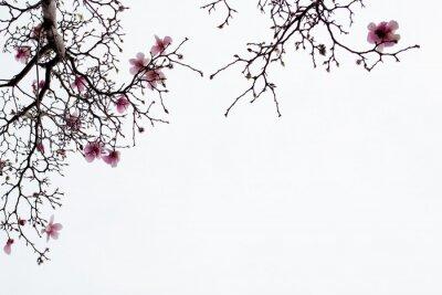 Fotomural Japonês, magnólia, flores, branca, fundo