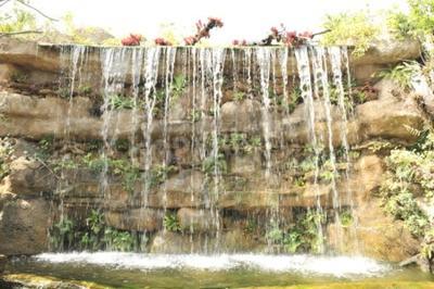 Fotomural Jardim tropical