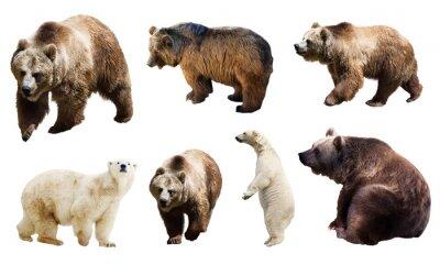 Fotomural Jogo de muitos ursos. Isolado sobre o branco