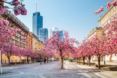 Fotomural Kirschbaumblüte em Frankfurt am Main, Alemanha