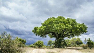 Fotomural Kruger National park landscape, África do Sul