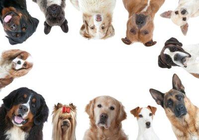 Fotomural La Grande Variété des races caninos