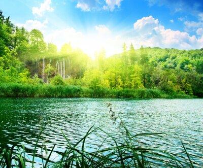 Fotomural lago na floresta profunda