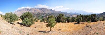 Fotomural Landschaft mit Olivenbäumen in der Insel Kreta