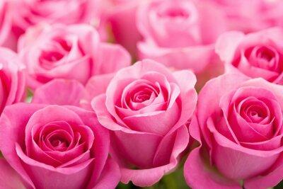 Fotomural linda rosa flores fundo