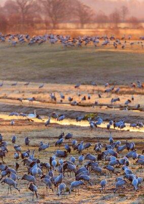Fotomural Luz do amanhecer no campo com guindastes