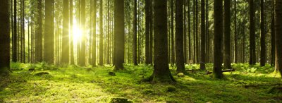 Fotomural Luz solar na floresta verde.