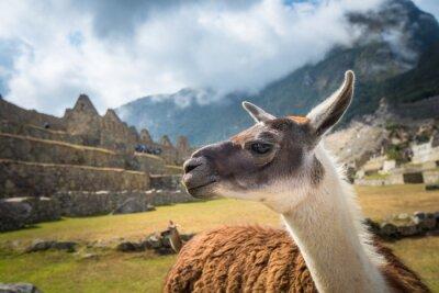 Fotomural Machu Picchu, local do património mundial do UNESCO. Uma das Novas Sete Maravilhas do mundo