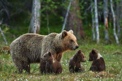 Fotomural Mãe e filhotes de urso