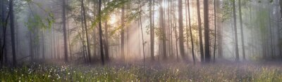 Fotomural Mágica floresta dos Cárpatos ao amanhecer