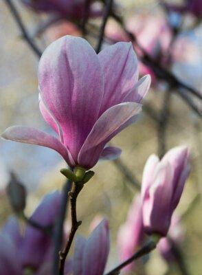 Fotomural Magnólia fleur