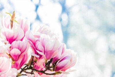Fotomural magnólia flor rosa