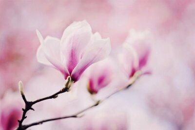 Fotomural magnólia rosa