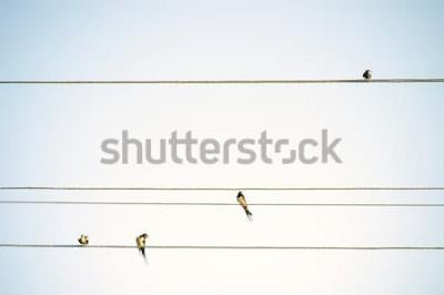 Fotomural Mamas de pássaros sentado em fios de fundo minimalista da primavera