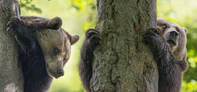 Fotomural Marrom, ursos, árvores