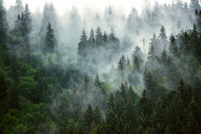 Fotomural Misty mountain landscape
