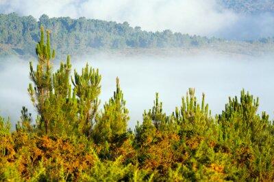 Fotomural Misty paisagem com pinhal