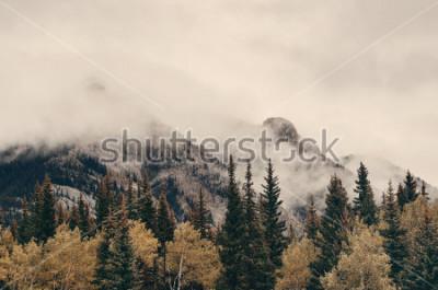 Fotomural Montanhas nevoentas e floresta do parque nacional de Banff no Canadá.