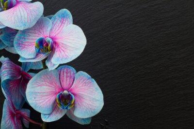 Fotomural Monte, violeta, orquídeas