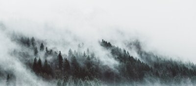 Fotomural Moody forest landscape with fog and mist