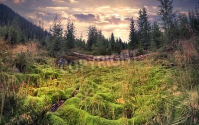 Fotomural Nascer do sol de verão colorido na floresta mágica com enorme tapete de musgo verde