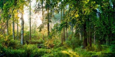 Fotomural Nascer do sol na floresta