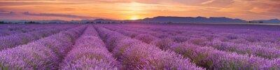 Fotomural Nascer do sol sobre campos de lavanda na Provence, França