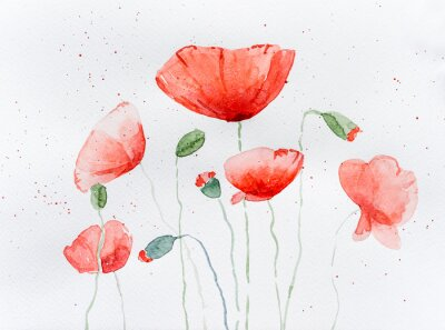 Fotomural Natural drawing of poppy flowers