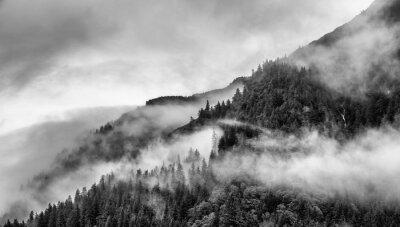 Fotomural Névoa no topo da montanha com pinheiro