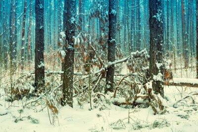 Fotomural Nevoeiro, pinho, floresta, coberto, primeiro, neve