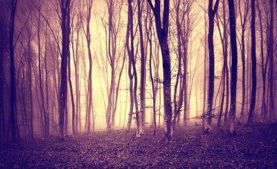 Fotomural O amarelo roxo do vintage coloriu a luz místico na paisagem assustador da floresta.