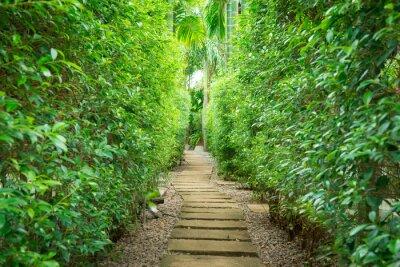Fotomural O caminho no jardim