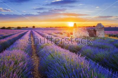 Fotomural O sol está se pondo sobre uma bela lavanda roxa, arquivada em Valensole. Provence, França