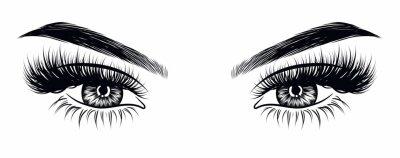 Fotomural Olhar de maquiagem sexy da mulher desenhados à mão com sobrancelhas perfeitamente perfeitas e cílios extra completos. Idéia para cartão de visita de negócios, tipografia vector. Olhar salão perfeito
