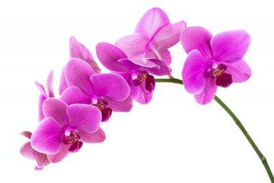 Fotomural Orquídea