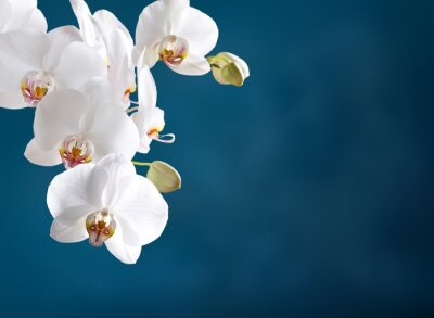 Fotomural Orquídea branca