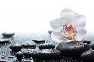 Fotomural orquídea branca e molhados pedras pretas