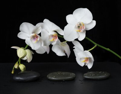 Fotomural Orquídea branca em um fundo preto