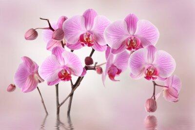 Fotomural Orquídeas cor de rosa projeto do fundo da flor