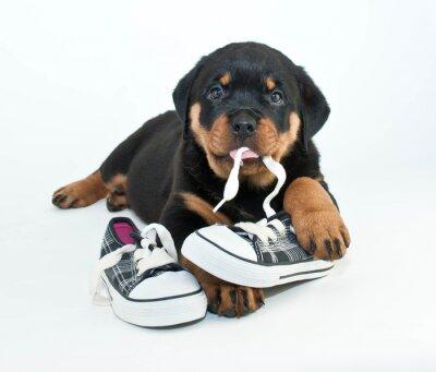 Fotomural Os meus sapatos!