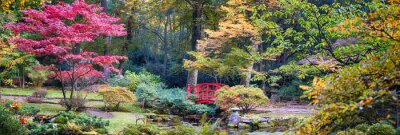 Fotomural Outono no parque japonês, panorama