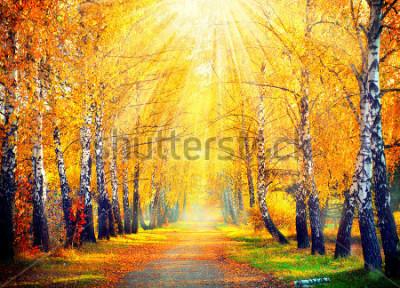 Fotomural Outono. Outono. Parque outonal. Árvores e folhas do outono em raios do sol. Bela cena de outono