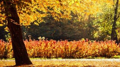 Fotomural Outono, paisagem, parque