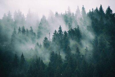Fotomural Paisagem brumosa com floresta de abeto no estilo retro vintage hipster