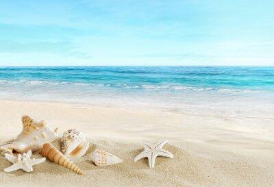 Fotomural Paisagem com conchas na praia tropical
