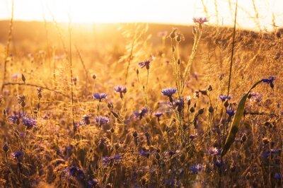Fotomural Paisagem com flores silvestres nos raios do sol poente