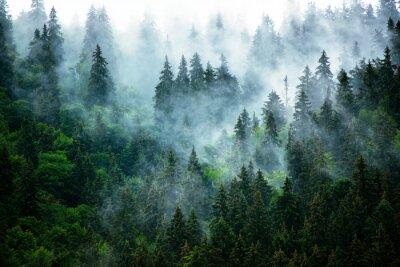 Fotomural Paisagem da montanha enevoada