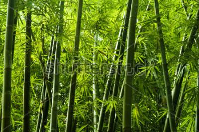 Fotomural Paisagem, de, árvore bambu, em, tropicais, floresta tropical, malásia