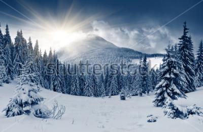Fotomural Paisagem de inverno linda com neve coberta de árvores