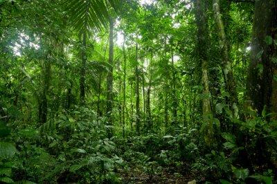 Fotomural Paisagem Tropical Rainforest, Amazon
